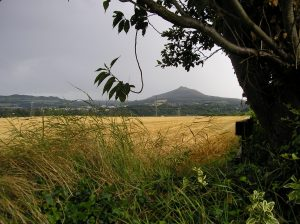 View of Sugarloaf from Ballyman Road