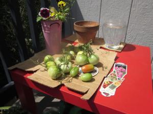 tomatoes 050