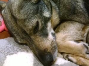 231115-3 Lene's dog