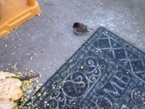 injured bird 005