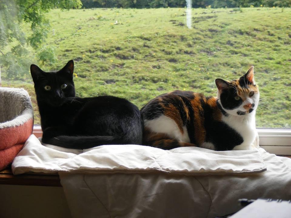 freyalyn's cats