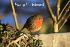 merry christmas wren