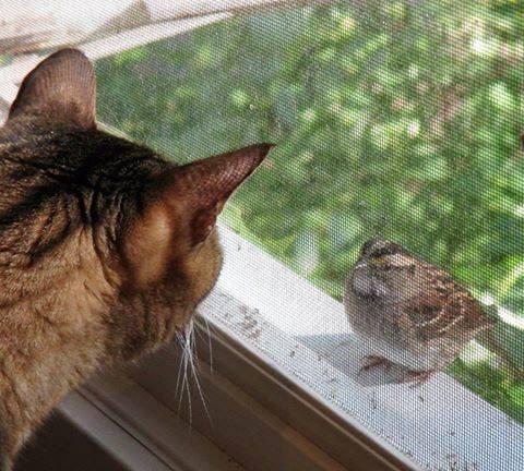 feli and bird