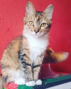 cat in Sao Paulo Brazil