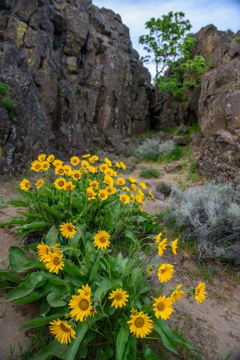 More from Horse Thief Butte, flowers and hieroglyphs