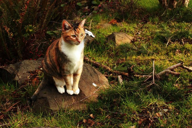 tricot cat