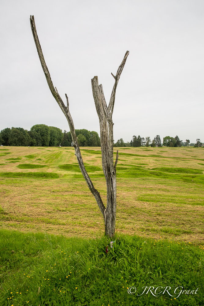 The Danger Tree at Beaumont Hamel