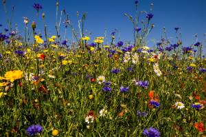 Gardening for Bio-Diversity