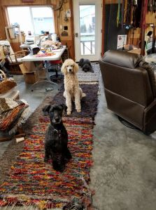 dogs and rugs